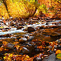 Fall Flow At Mcgee Creek by Lynn Bauer