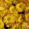 Fall Flowers by June Hatleberg Photography