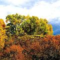Fall Foilage by Gerald Blaine
