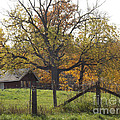 Fall Foilage In Country by Brenda Brown