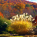 Fall Foilage In The Mountains by Jennifer Stackpole