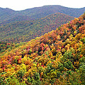 Fall Folage 2 Along The Blueridge by Duane McCullough