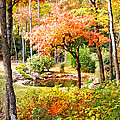 Fall Folage And Pond by Duane McCullough