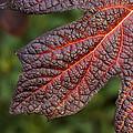 Fall Foliage 4 by Robert Ullmann