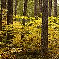Fall Foliage by Belinda Greb