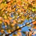 Fall Foliage by Cheryl Baxter
