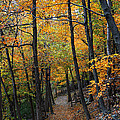 Fall Foliage Colors 03 by Metro DC Photography