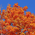 Fall Foliage Colors 19 by Metro DC Photography