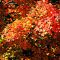 Fall Foliage Colors 21 by Metro DC Photography