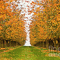 Fall Foliage by Heiko Koehrer-Wagner