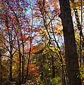 Fall Foliage Iv by Michelle Velencia Deslauriers