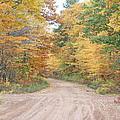 Fall Foliage by John Welling