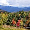 Fall Foliage by Kerri Mortenson