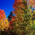 Fall Foliage Palette by Scott McGuire