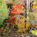 Fall Foliage Reflection 2 by Craig Levin