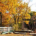 Fall Foliage Vi by Michelle Velencia Deslauriers