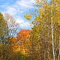 Fall Forest by Ann Horn