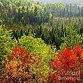 Fall Forest Rain Storm by Elena Elisseeva