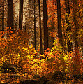 Fall Forest  by Saija  Lehtonen