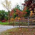 Fall Gate by Patti Smith