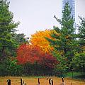 Fall Geese Of Washington by Jost Houk