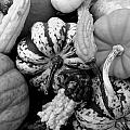 Fall Gourds Black And White by Erin Rednour
