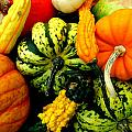 Fall Gourds by Erin Rednour