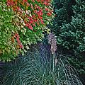 Fall Grass by Skip Willits
