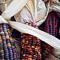 Fall Harvest Corn by Susan Garren