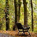 Fall Has Arrived by Susan Garren