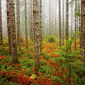 Fall Has Come by Ingrid Smith-Johnsen