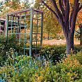 Fall Herb Garden0981 by Carolyn Stagger Cokley