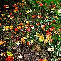 Fall Imagery by HweeYen Ong