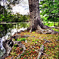 Fall In Audubon Park by Ray Devlin