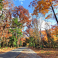 Fall In Cades Cove by Jackie Novak