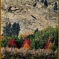 Fall In Carson Valley  by Bobbee Rickard