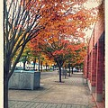Fall In Downtown Vancouver Washington by Melissa Coffield