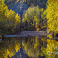 Autumn Reflections In Fort Mcmurray by Alanna DPhoto