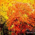 Fall In Full Bloom by Nicholas Costanzo