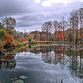 Fall In Gator Country by JC Findley