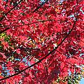 Fall In Illinois by Debbie Hart