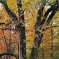 Fall In Kentucky by Matt McClintock