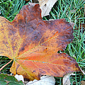 Fall In Leaf by Cathy Anderson
