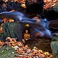 Fall In Rock Creek Park by Bill Jonscher