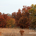 Fall In The Flint Hills by Betty Morgan