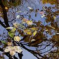 Fall In The Lake In Vienna No. 1 by Nili Tochner