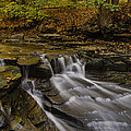 Fall In The Metroparks by Torrey McNeal