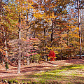Fall In The Ozarks by John M Bailey