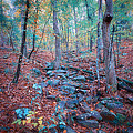 Fall In The Woodlands by Randy Davidson