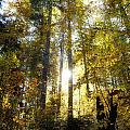 Fall In The Woods Close To The Elmau by Fabian Roessler